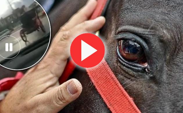 Napoli, VIDEO cavallo in fuga, muore dopo uno scontro frontale con un camion..immagini forti