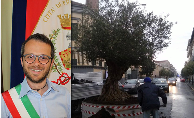 """Frattamaggiore: Sono conclusi i lavori di installazione dell'Ulivo in p.zza Crispino. Il Sindaco: """"Frattamaggiore sarà sempre più bella"""""""