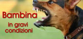 Arzano: Bambina di 6 anni assalita da un cane, è in gravi condizione all'Ospedale Cardarelli di Napoli.