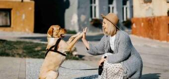 Detrazione di 1.000 euro per chi ha un cane: a chi spetta e come ottenerla